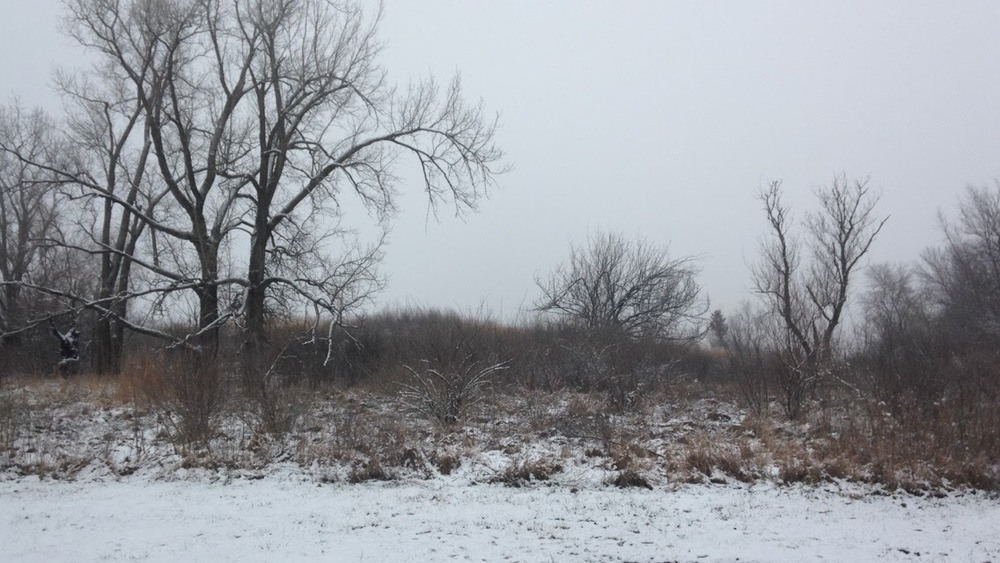Winter-Day-Trees.jpg