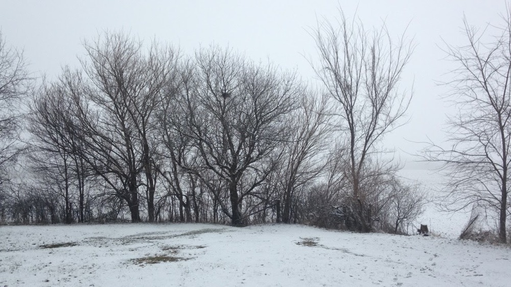 Winter-Day-Yard.jpg