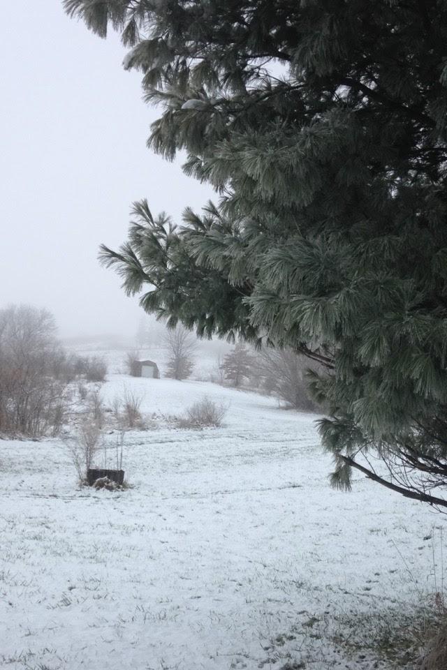 Winter-Day-Evergreen.jpg