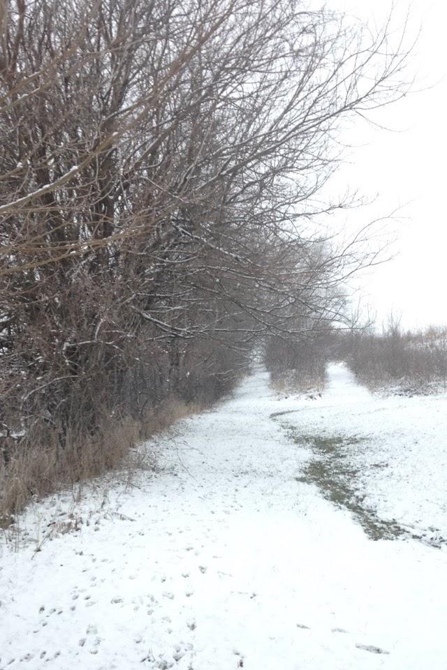 Winter-Day-Trails.jpg