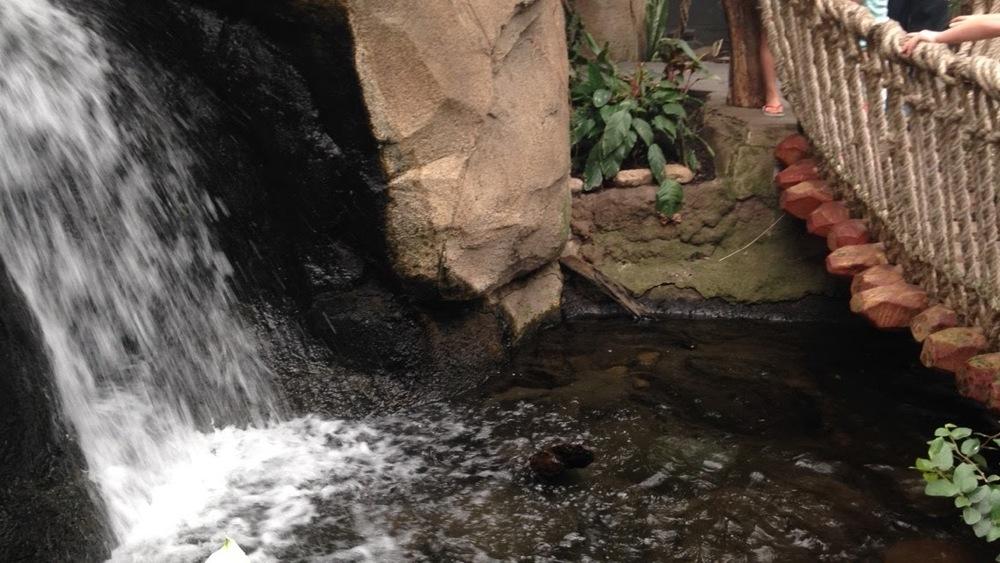 Waterfall-Bridge.jpg
