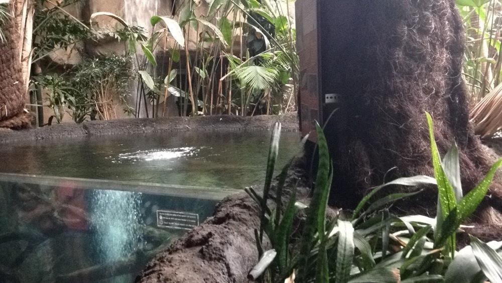 Rainforest-Pond.jpg