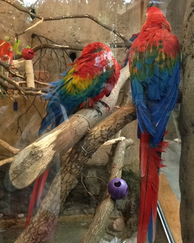 Rainbow-Parrots.jpg