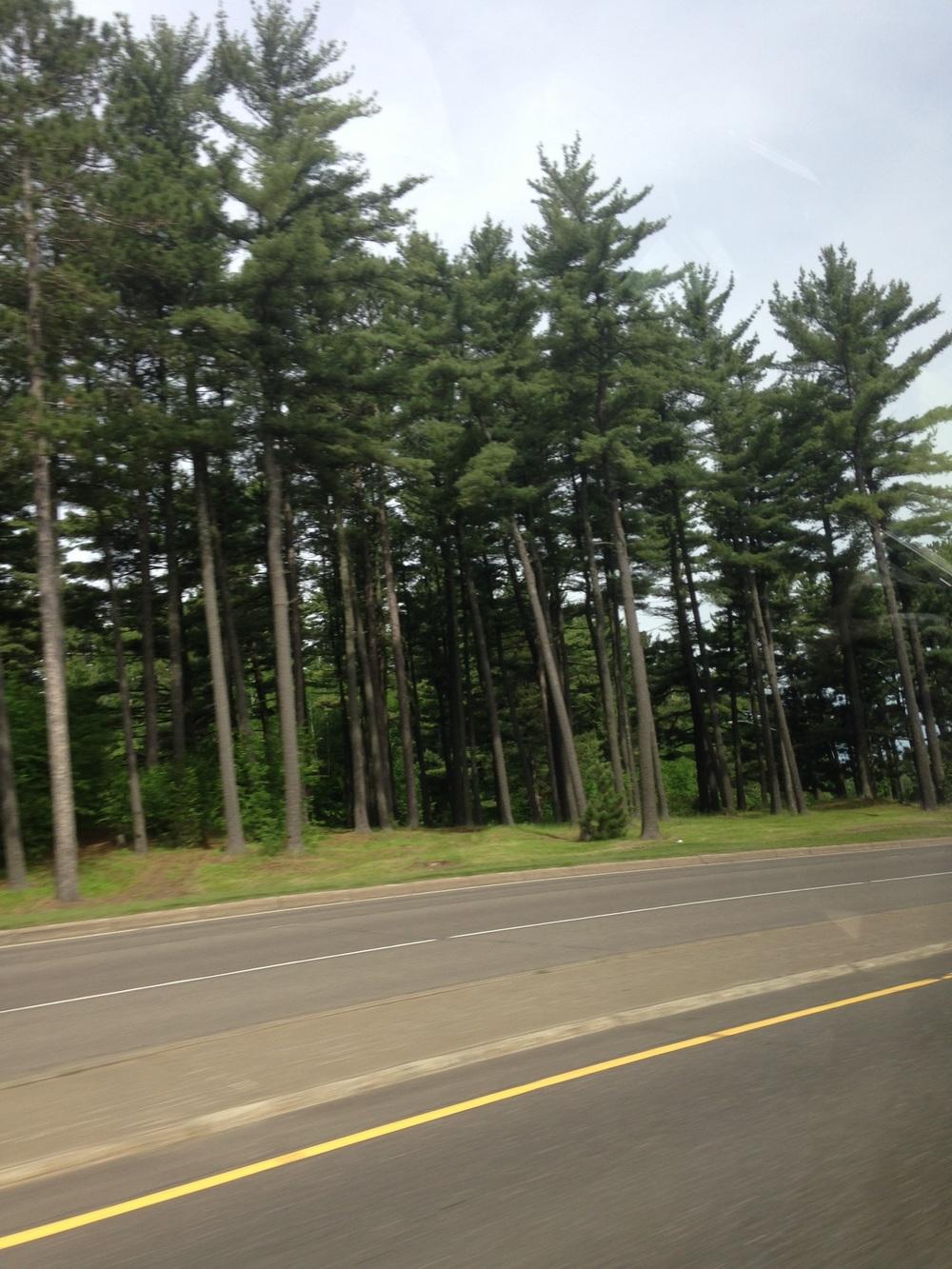 Minnesota-Trees.jpg