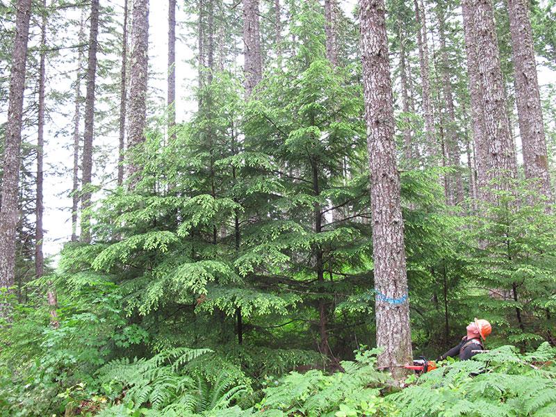 Forest-Grove-800.jpg