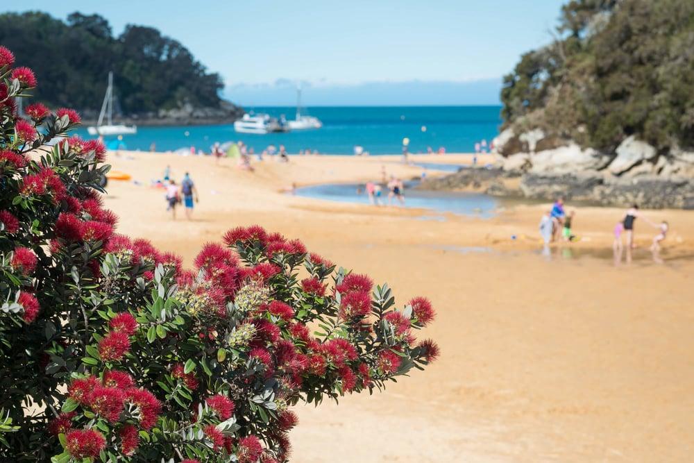 New Zealand Christmas.jpg