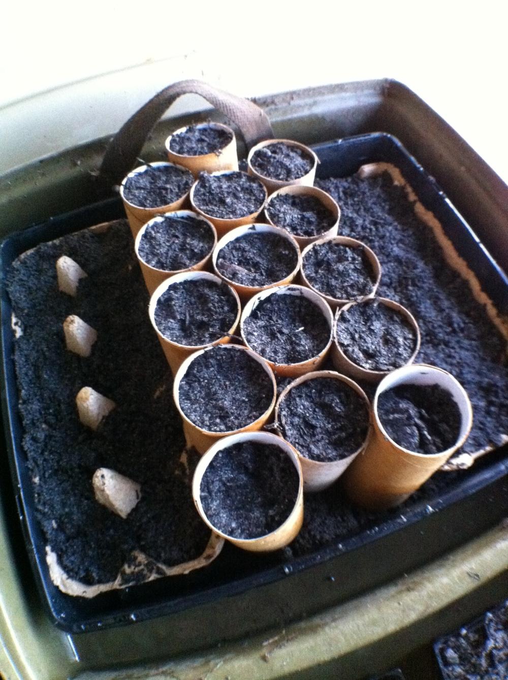 diy seed trays.JPG