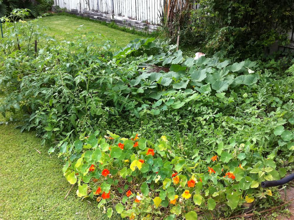 First Garden Patch.jpg