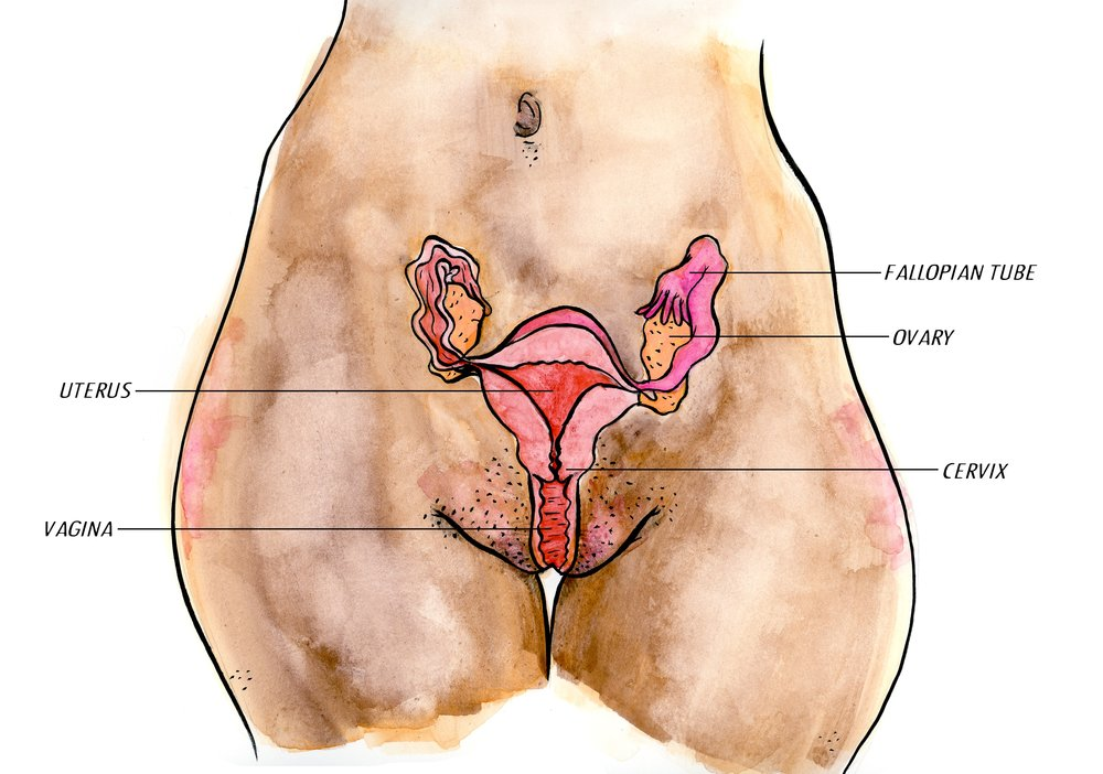 ANATOMY:  WATERCOLOR ON PAPER, FOR  THE MIDWIFE IS IN   || CLICK TO OPEN GALLERY