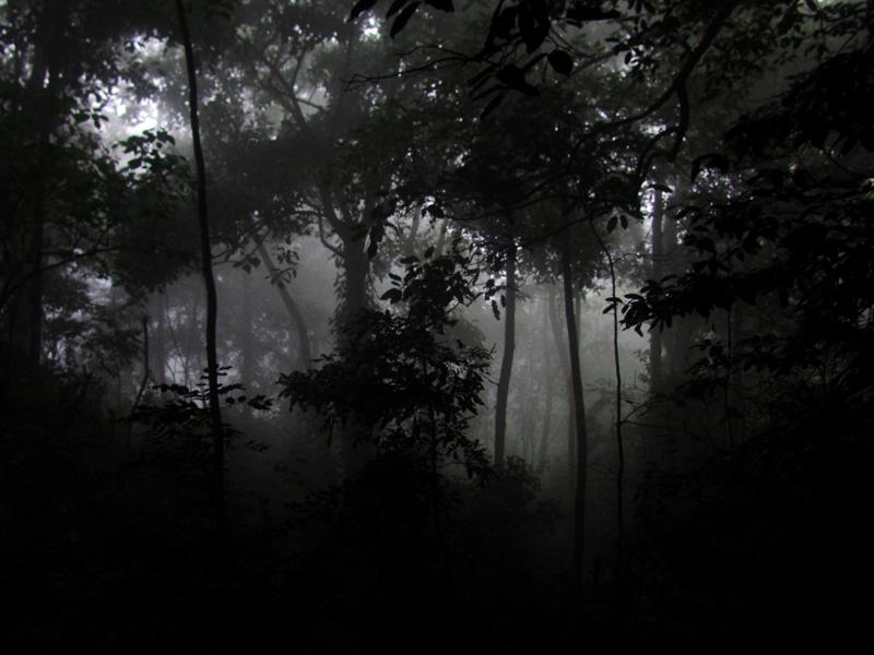 niebla.JPG