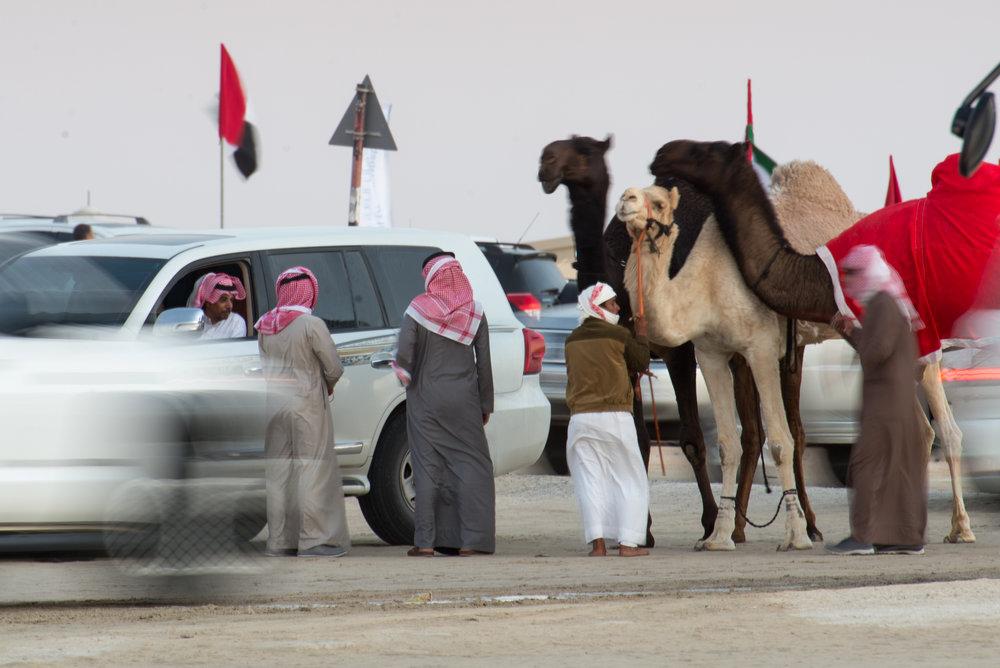 CamelFest_2018-74.jpg