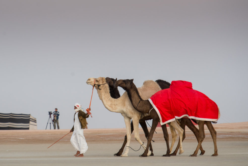 CamelFest_2018-75.jpg