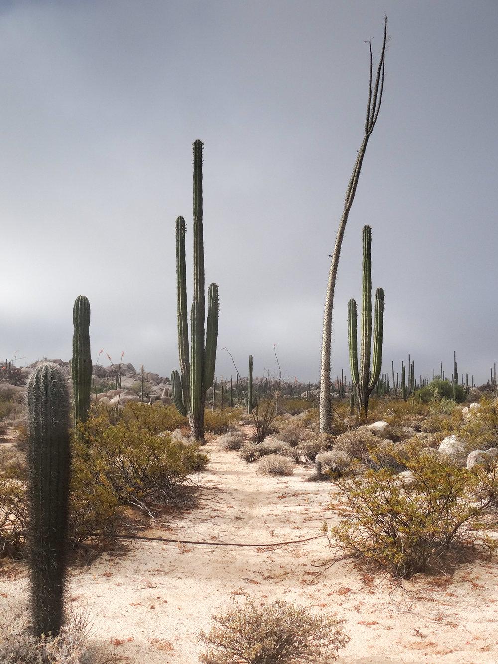 Baja2013-30.jpg