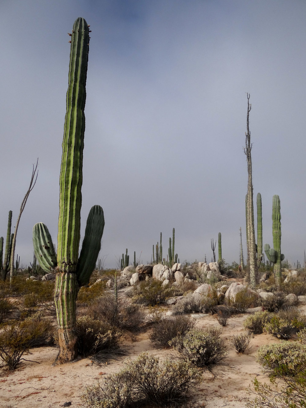 Baja2013-31.jpg