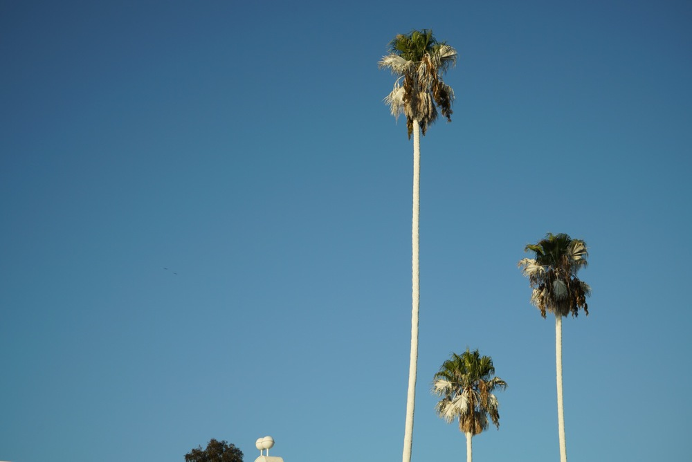 vincent l'amoureux installation,sunset -the palm leaves aren't white anymore :(