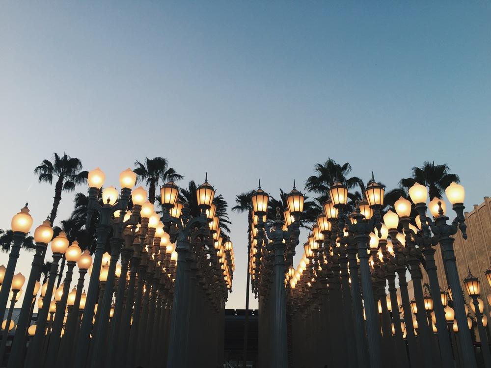 lama lights + palms