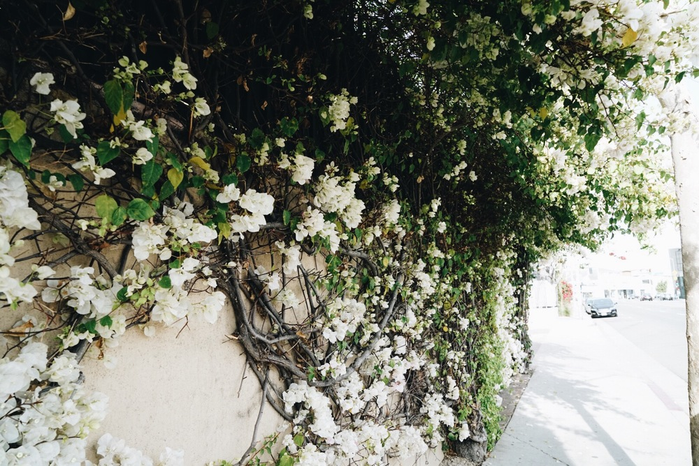 Pretty Flowers, Melrose Avenue