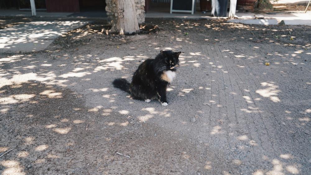 The friendliest restaurant kitty.