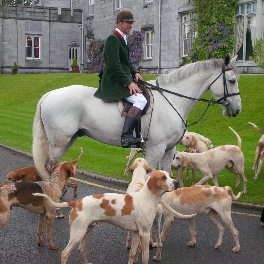 Horses & Hounds - Clare, Ireland.jpg
