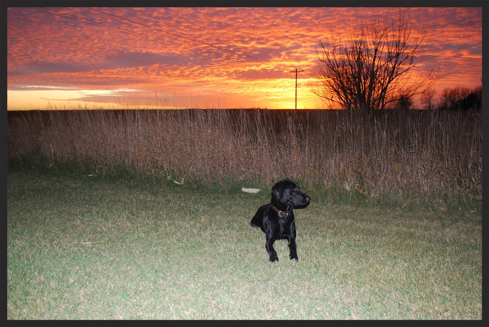 Willson lays next to the CRP, listening to the cackles of rooster pheasants as the sun sets