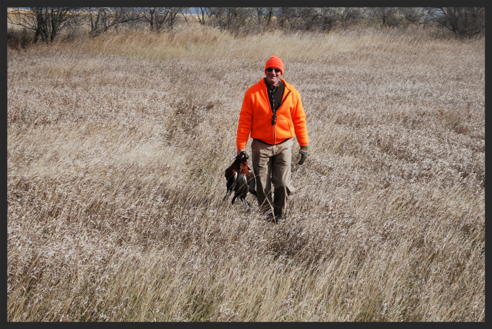 Jim rarely leaves a field without carrying a few pheasants