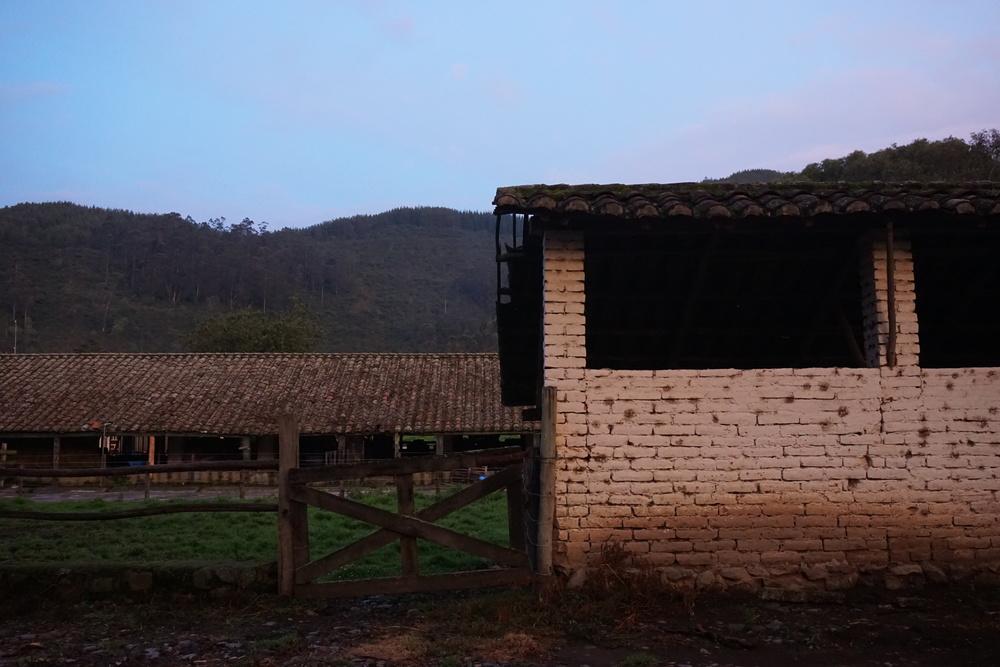 Dairy milking station