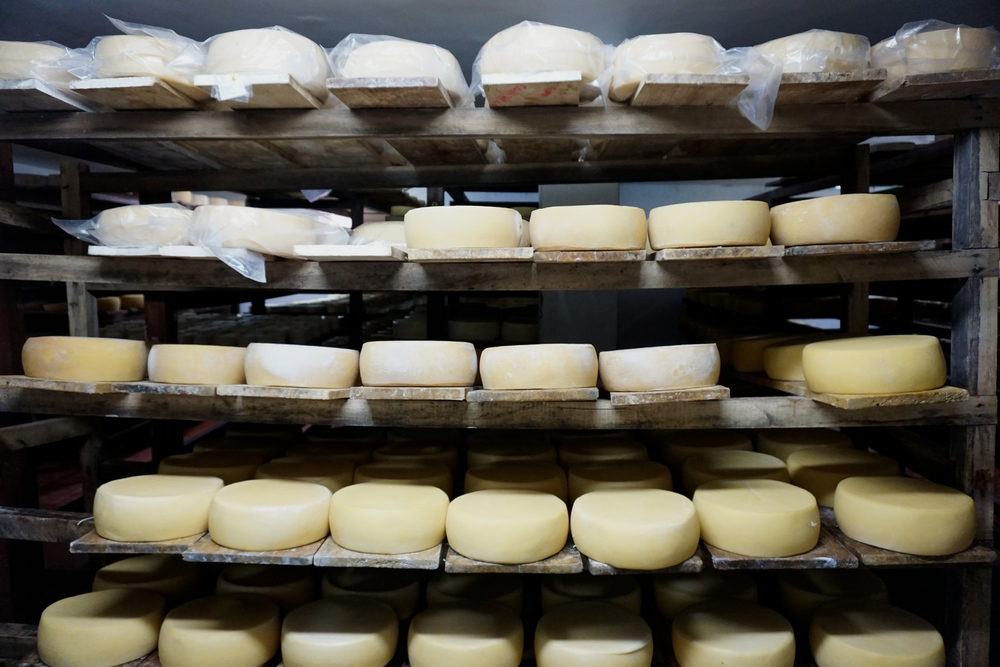 Cheese maturing on oak