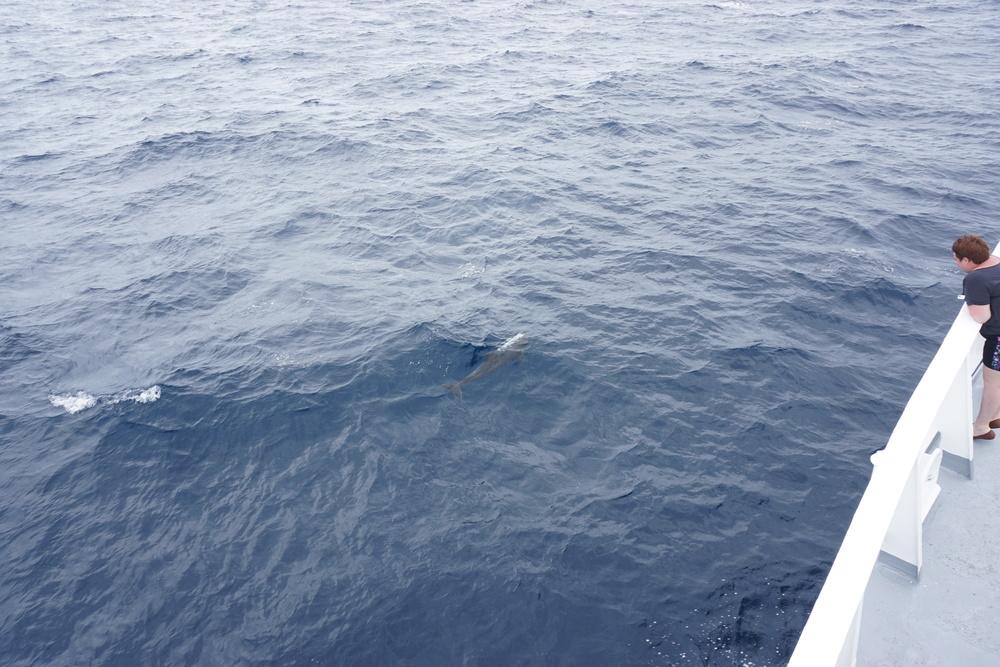 Dolphins-ho!