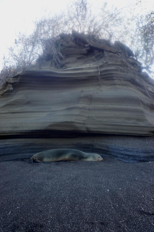 Sea Lion napping