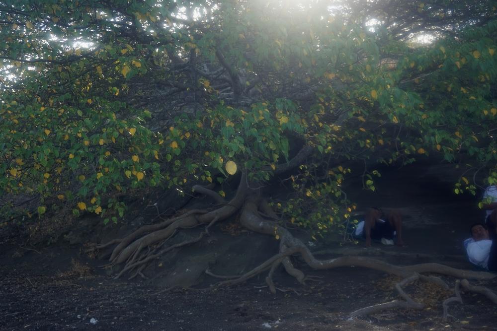 Poison Apple Tree