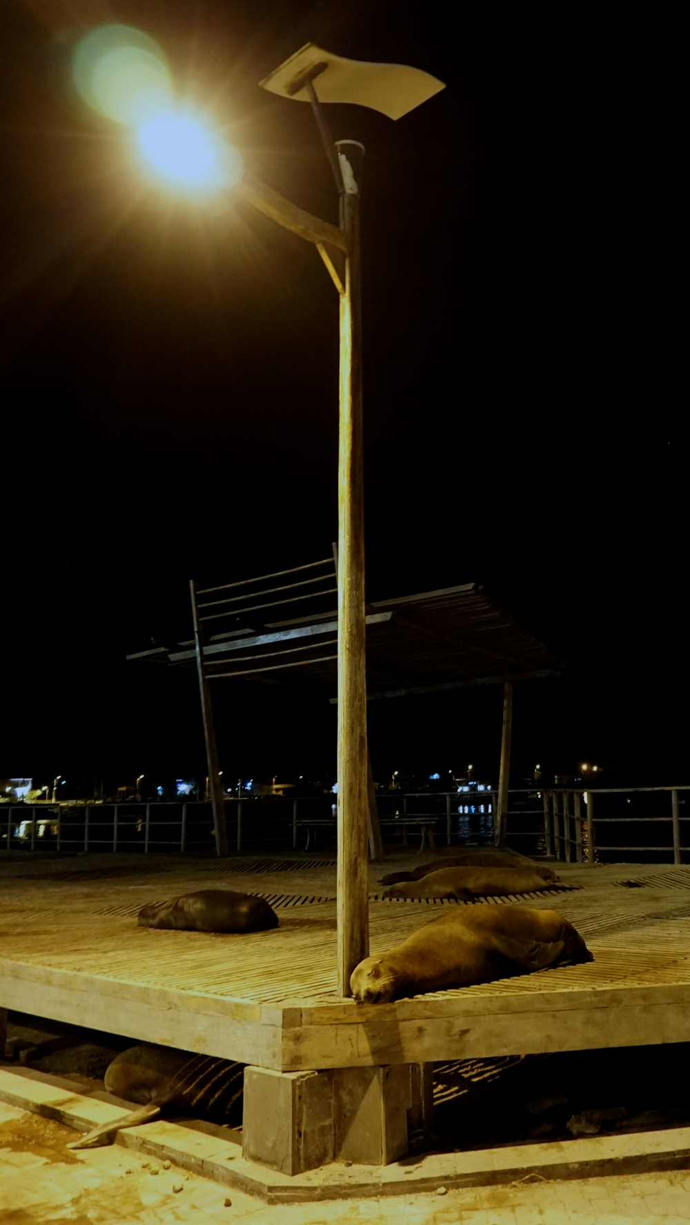 Is this real life? Of course sea lions are just napping under streetlights and on benches... that's a thing...