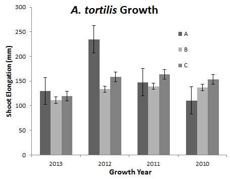 Figure 1. Annual Growth by Site.  Variations in growth is represented by mean (+SE) shoot elongation in  A. tortilis , measured using a terminal bud scar scale, at three mesic sites (A, B & C) in the northern woodlands of Tarangire National Park. Measurements were taken for years 2013, 2012, 2011 & 2010.