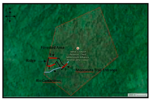 Figure 1. Three 200 m transects through the Primary forest of Montanita trail in the Jama-Coaque Ecological Reserve.  One through the river (#7), one on the southern portion of the trail, (#8) and one on the northern portion of the trail (#9). All transects are illustrated in red, while theriver is illustrated in blue, and the pre-existing Montanita trail in black.