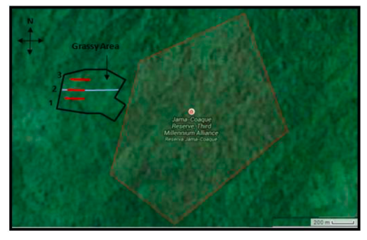 Figure 2. Three parallel 200 m transects through the reforested area near the Jama-Coaque Ecological Reserve.  One through the creek (#2), one north of the creek (#3), and one south of the creek (#1).All transects are approximately equidistant from each other and are illustrated in red, while the creek is illustrated in blue, and the plot border in black.