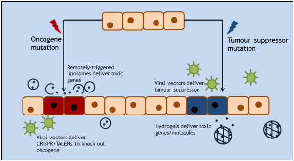 Figure 2. Methods of selectively killing cancer cells.  Cancer-causing mutations can be broadly grouped into two categories: mutations in oncogenes and mutations in tumour suppressors. Malignant cells with active oncogenes can be targeted by using viral vectors deliver CRISPR/Cas9, TALENs or ZFNs, which then excise or silence the relevant oncogenes. Viral vectors can also be used to deliver tumour suppressor genes such as p53 which are harmless to healthy cells but toxic to cancer cells. Liposomes can deliver toxic genes directly to cancer cells through the use of remote-triggering systems; similarly, hydrogels can provide a controlled release of therapeutic genes once inside malignant tissues.