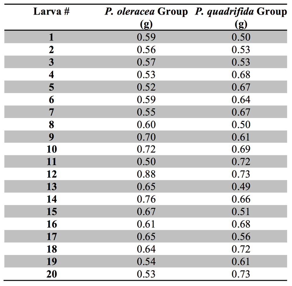 Table 2. Pupal Weight of Danaid eggfly larvae fed Portulaca oleracea versus Portulaca quadrifida.  The weight of the pupae/cocoons of individuals reared on P. oleracea versus P. quadrifida. For larvae reared on P. oleracea the range was between 0.50 g and 0.88 g, while for larvae reared on P. quadrifida the range was between 0.49 g and 0.73 g.