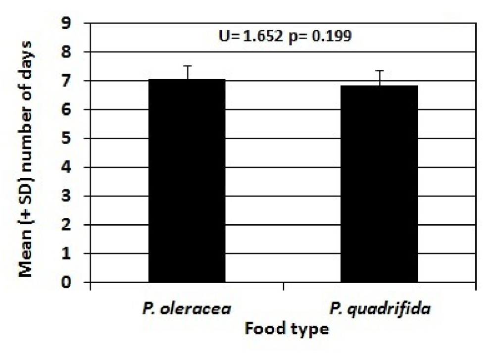 Figure 5: Mean Number of Days from Pupa to Adult of Danaid Eggfly larvae fed Portulaca oleracea versus Portulaca quadrifida (± s.d.).  Individuals reared on P. oleracea spent an average of 7.05 ±0.39 days as pupae, while individuals reared on P. quadrifida spent an average of 6.85 ±0.58 days as pupae. It was determined that the difference in time spent as pupae between the two populations was not statistically significant (p=0.199).