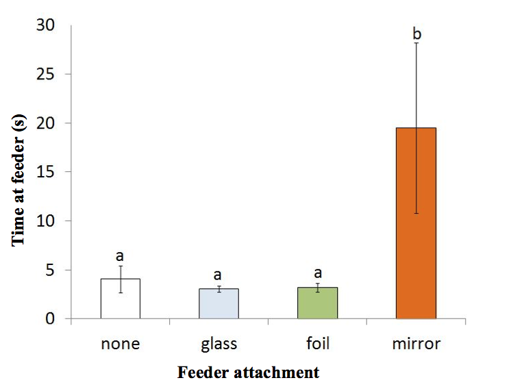 Figure 2. Effect of treatment (none, glass, foil, or mirror mounted on a feeder) on mean visit time (seconds + s.e.) by Black-capped chickadees.  Bars with the same letters are not statistically significant from each other.