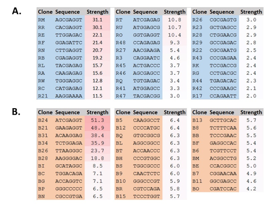 Figure 5. Selected clones from simple RBS mutant libraries.  A. Simple RBS N6 library. B. Simple RBS N8 library. Numbers represent the percentage of RFP produced compared to the strongest RBS, C10 in Figure 6. RBS = ribosome binding site.