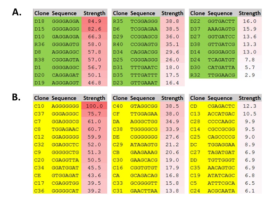 Figure 6. Selected clones from C dog RBS mutant libraries.  A. C dog N6 library. B. C dog N8 library. Numbers represent the percentage of RFP produced compared to the strongest RBS, C10. RBS = ribosome binding site; C dog = bicistronic RBS.