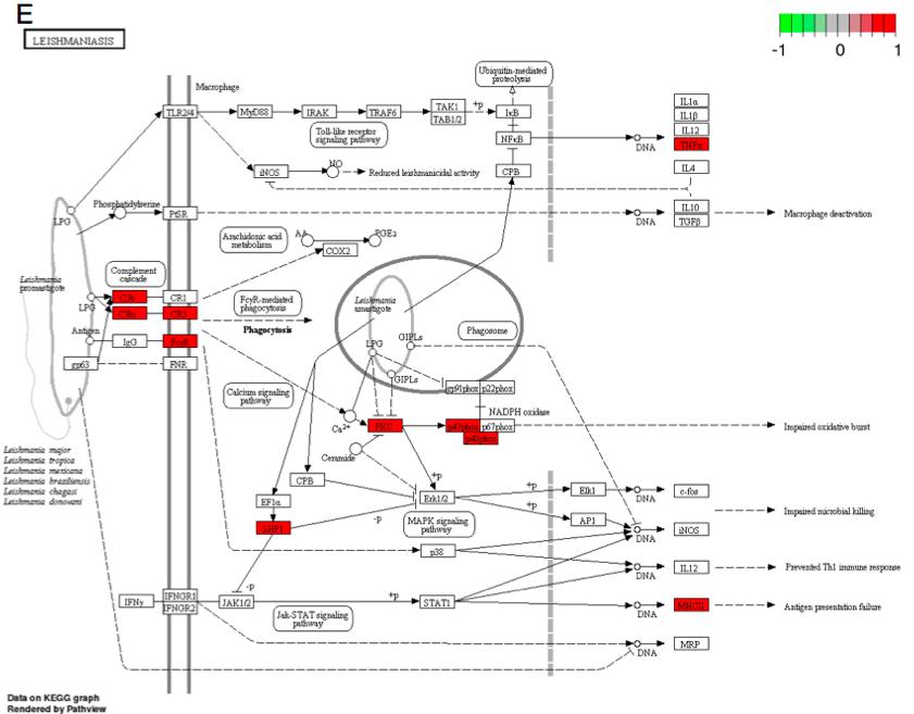 Figure 3. Response to Leishmanias infection (mmu05140).