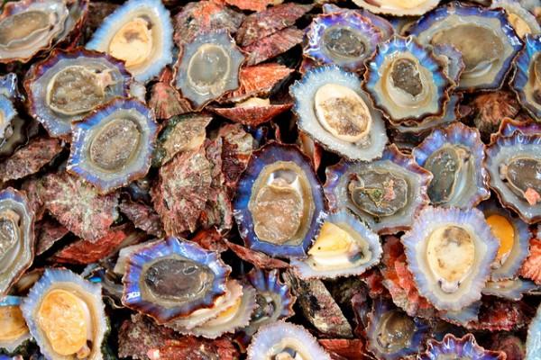 shellfish-e1332820710746.jpg