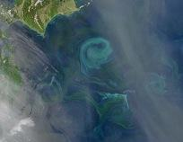 Figure 2 Plankton Bloom Near Hokkaido, Japan Credit: NASA image by Norman Kuring MODIS Ocean Color Team http://earthobservatory.nasa.gov/IOTD/view.php?id=38917