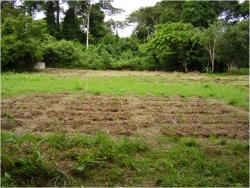 Figure 1: Field site at the University of Cape Coast near the botanical gardens. The image depicts the three blocks of beds where seedlings were planted and treatments applied.