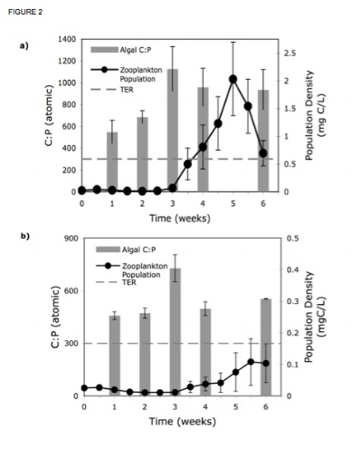Figure 2. This figure shows the relationship between the increase in zooplankton population and the algal C:P in a) high light and b) low light treatments. Data for algal C:P was lost in week 5 due to chemical reagent contamination.