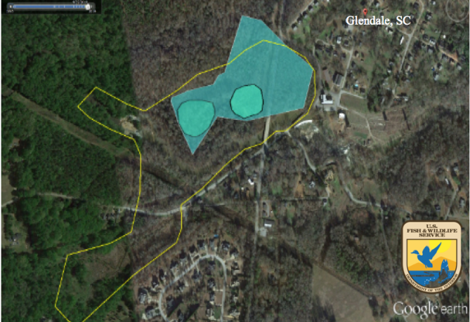 Figure 2.   Google Earth map derived from Fish and Wildlife Service wetland delineation database.  Yellow outline represents area of Glendale Mill pond in 1921. Turquoise area represents delineated outer boundary of wetlands, based on FWS delineation. Circle on the right refers to the Beaver Wetland, circle on the left refers to the Dragonfly wetland.