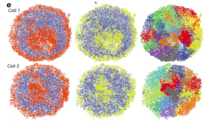 Figure 1. Chromosomes are arranged into discrete territories in the nucleus (Stevens et al., 2017).