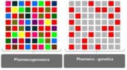 Figure 1. A model for understanding pharmacogenomic and pharmacogenetic approaches towards studying variable drug response. Individual squares represent genes that affect drug response. The entire 8X8 ensemble represents 64 genes involved in determining drug response. Each color represents one underlying mechanism. Red may represent drug metabolism; blue, drug transport; green, drug excretion; etc. Squares of the same color represent all the genes involved in one particular mechanism. Pharmacogenomics considers all 64 squares (i.e., all mechanisms and the respective genes). Pharmaco-genetics approaches drug response one mechanism at a time or one gene at a time. In order to understand drug response, both the big picture (all 64 squares) at the level of the genome as well as the fine details at the level of the allele must be considered. Thus, the two disciplines are tightly intertwined, and nomenclature is often interchangeable, with pharmaco-genomics often representing both sciences. In the clinical setting, pharmacogenomics can (1) identify patients at high risk for adverse drug responses and (2) optimize therapy for each patient by tailoring medicine. In addition, pharmacogenomics can speed up drug development by selecting feasible drug targets, reducing clinical trial sizes, and increasing safety of the trials.