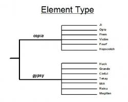Figure 2. Copia and Gypsy element familes. Here is a tree diagram depicting element type. Ji, Opie, Prem, Victim, Fourf, and Hopscotch are all Copia elements. Huck, Grande, Cinful Tekay, Milt, Reina, and Magillan are all Gypsy elements.