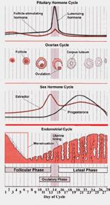 Figure 1: An overview of the menstrual cycle. Progesterone is critically important in controlling this progression of events and thus the ability to medically manipulate progesterone led to the development of birth control. Courtesy of Holistic Online
